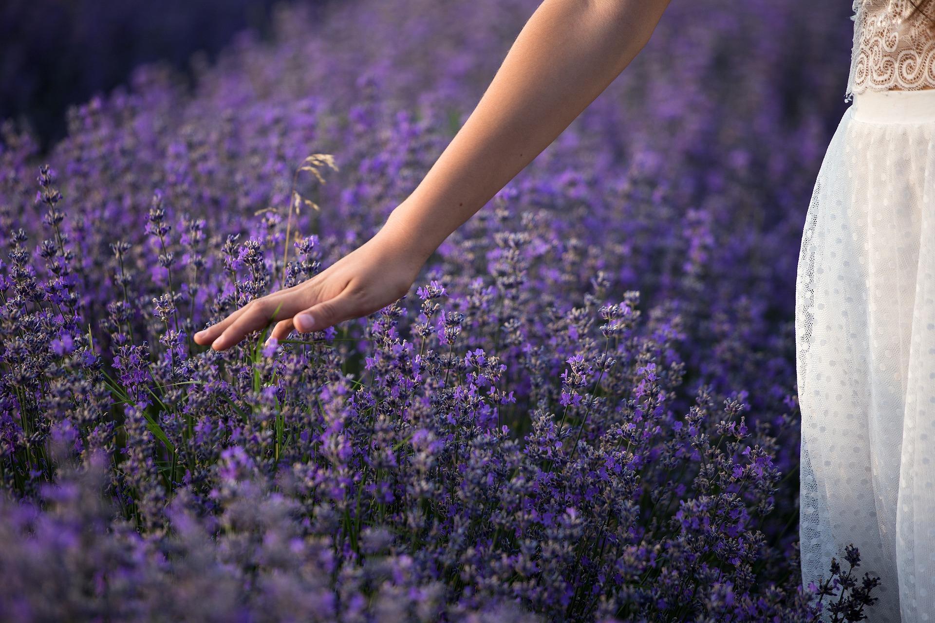 lavender-3576129_1920
